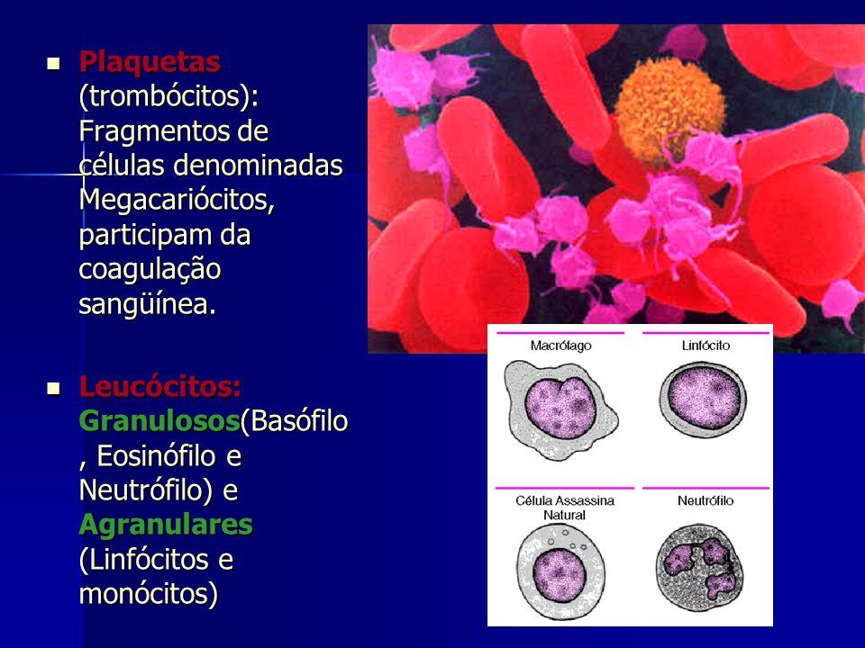 Plaquetas (trombócitos): Fragmentos de células denominadas Megacariócitos, participam da coagulação sangüínea.