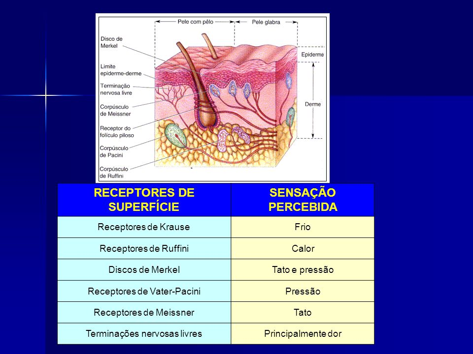 RECEPTORES DE SUPERFÍCIE