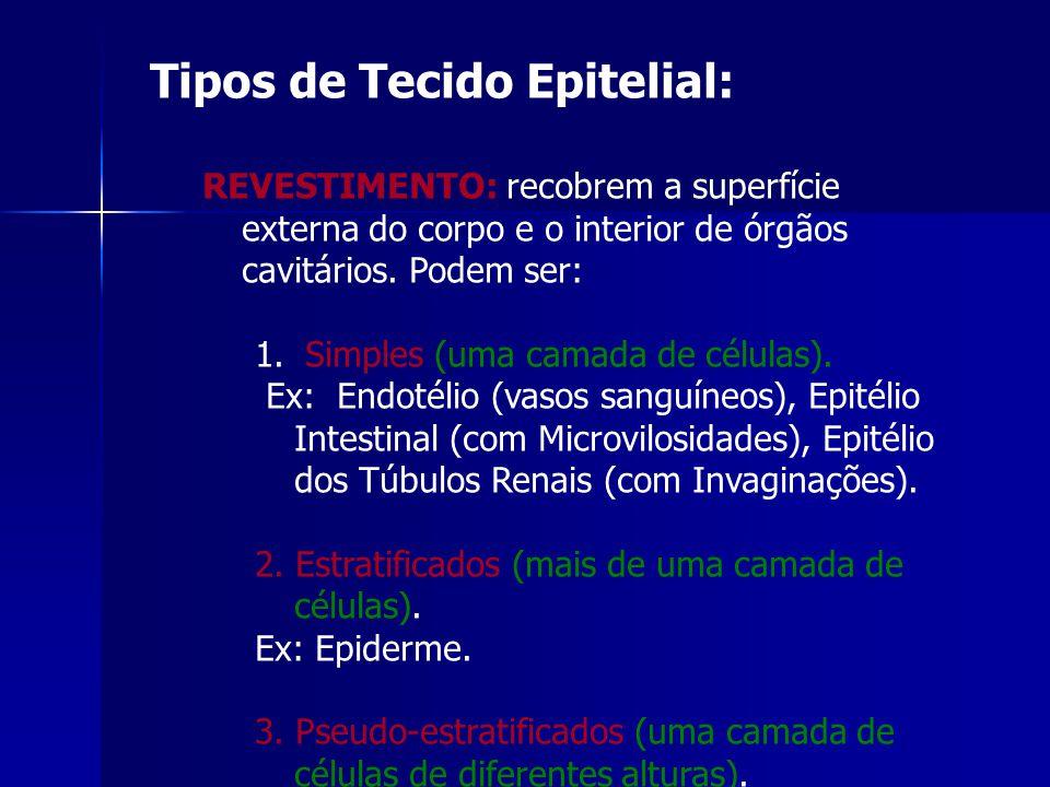 Tipos de Tecido Epitelial: