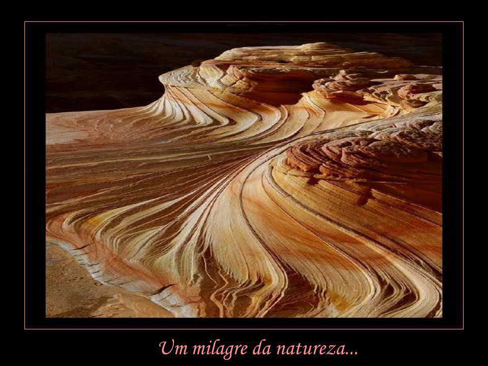 Um milagre da natureza...