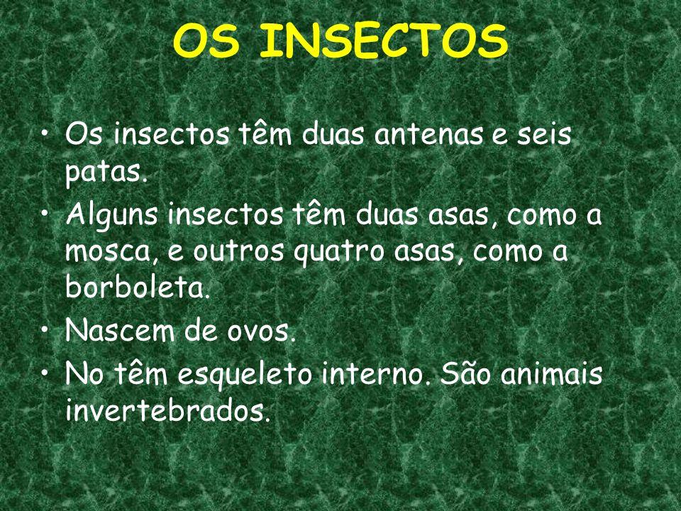 OS INSECTOS Os insectos têm duas antenas e seis patas.