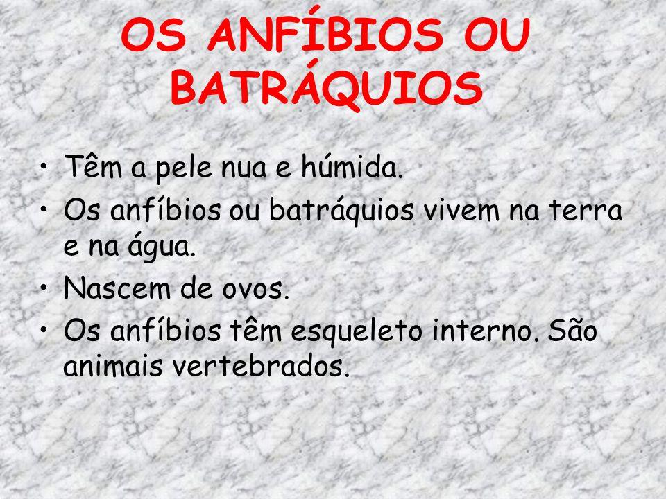 OS ANFÍBIOS OU BATRÁQUIOS