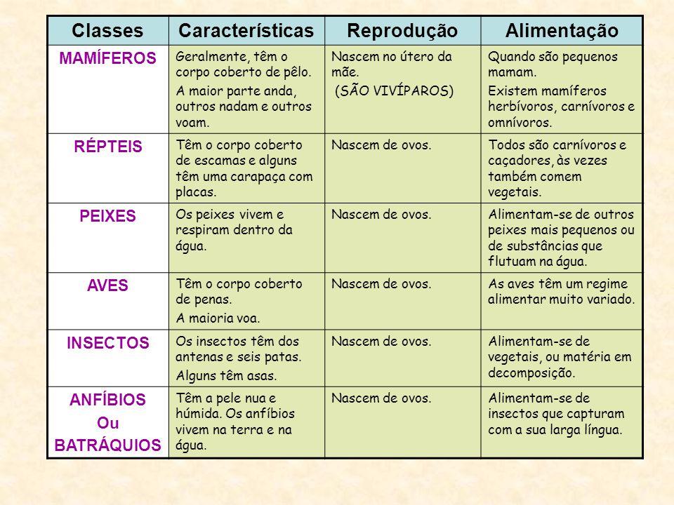 Classes Características Reprodução Alimentação
