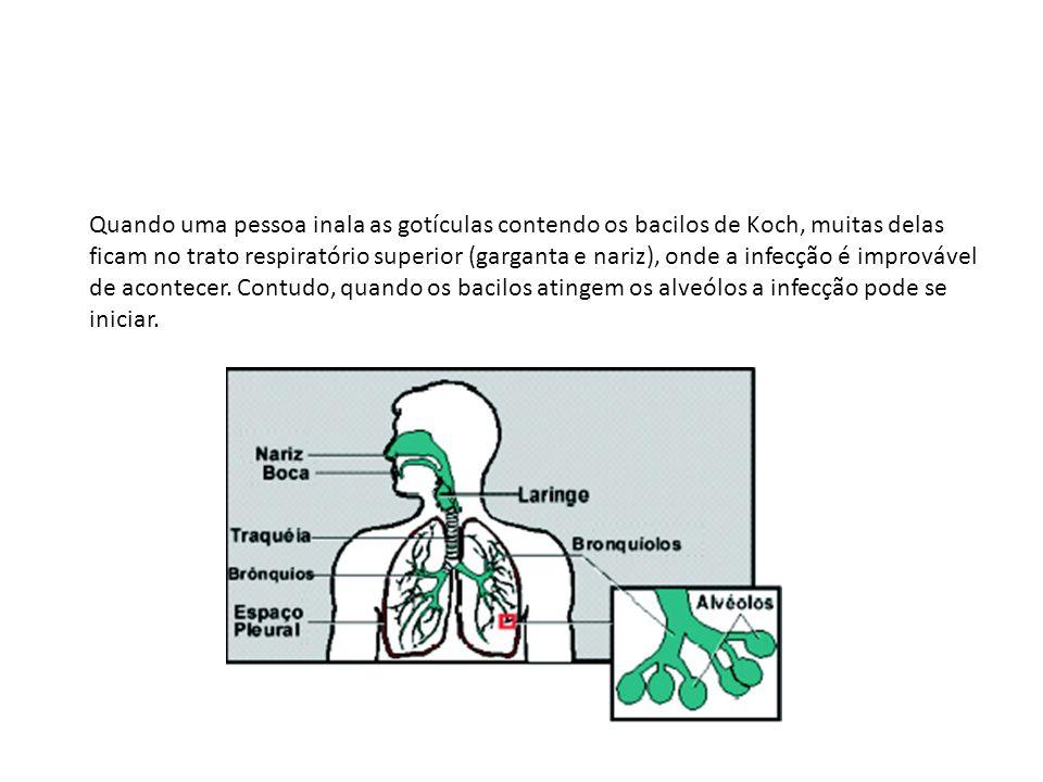Quando uma pessoa inala as gotículas contendo os bacilos de Koch, muitas delas ficam no trato respiratório superior (garganta e nariz), onde a infecção é improvável de acontecer.