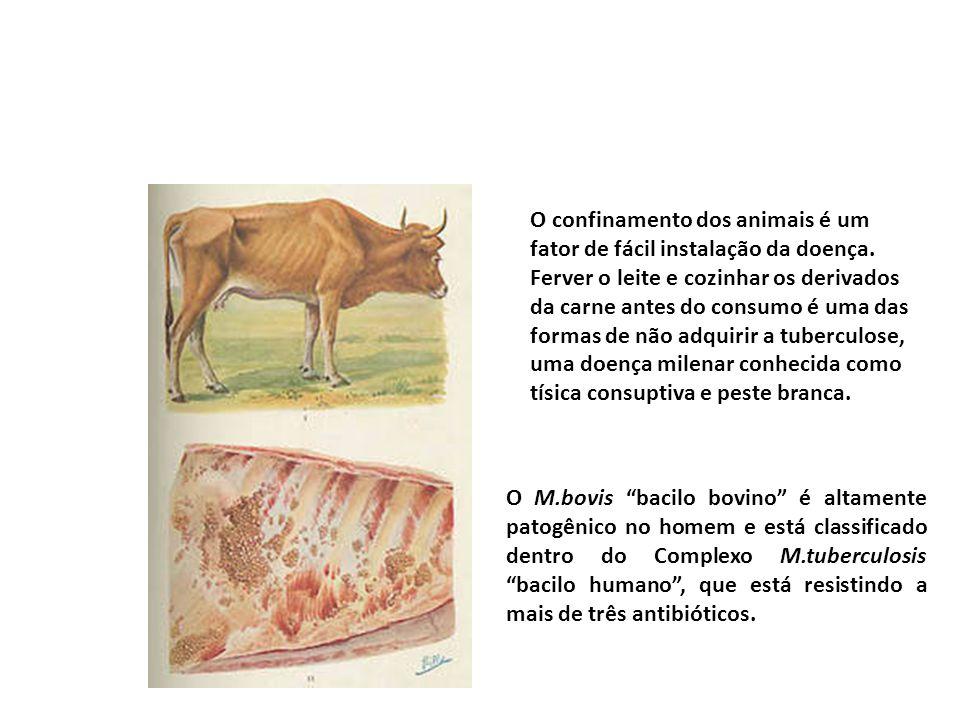 O confinamento dos animais é um fator de fácil instalação da doença
