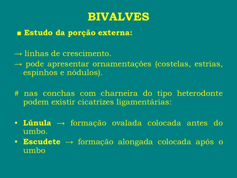 BIVALVES ■ Estudo da porção externa: → linhas de crescimento.