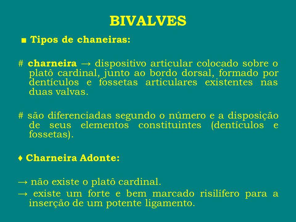 BIVALVES ■ Tipos de chaneiras: