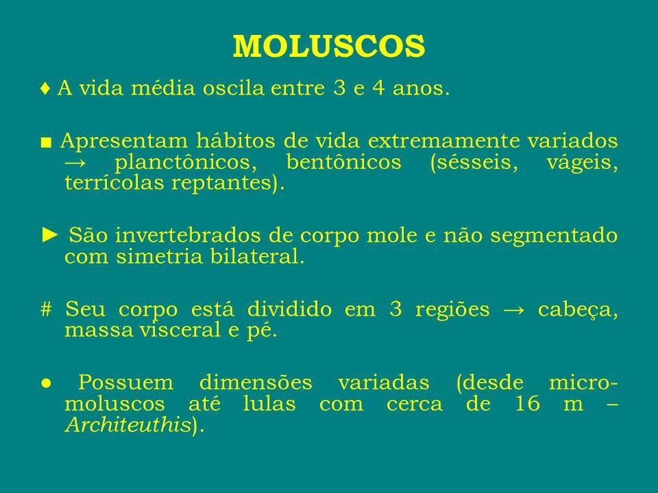 MOLUSCOS ♦ A vida média oscila entre 3 e 4 anos.