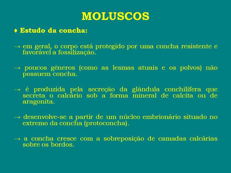 MOLUSCOS ♦ Estudo da concha: