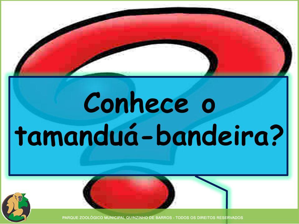 Conhece o tamanduá-bandeira