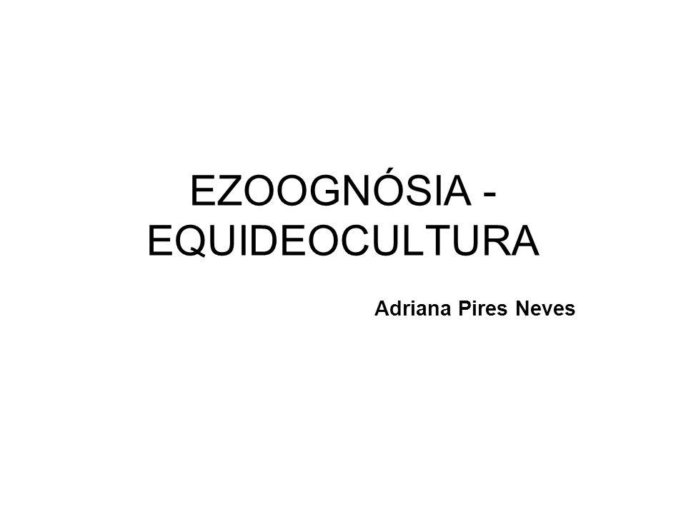 EZOOGNÓSIA - EQUIDEOCULTURA