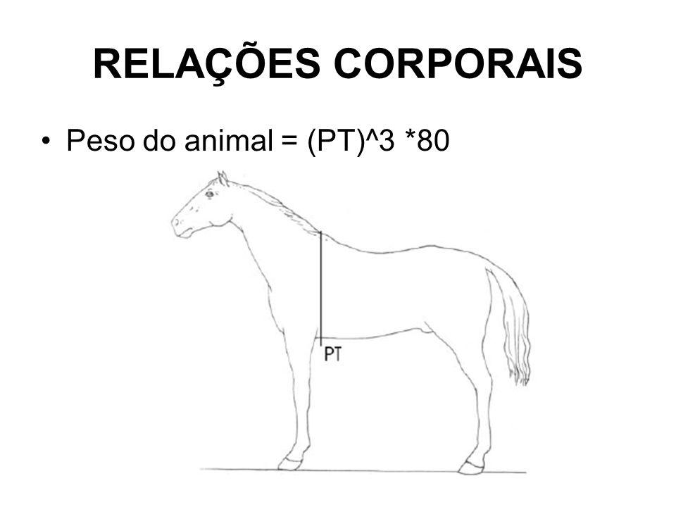 RELAÇÕES CORPORAIS Peso do animal = (PT)^3 *80