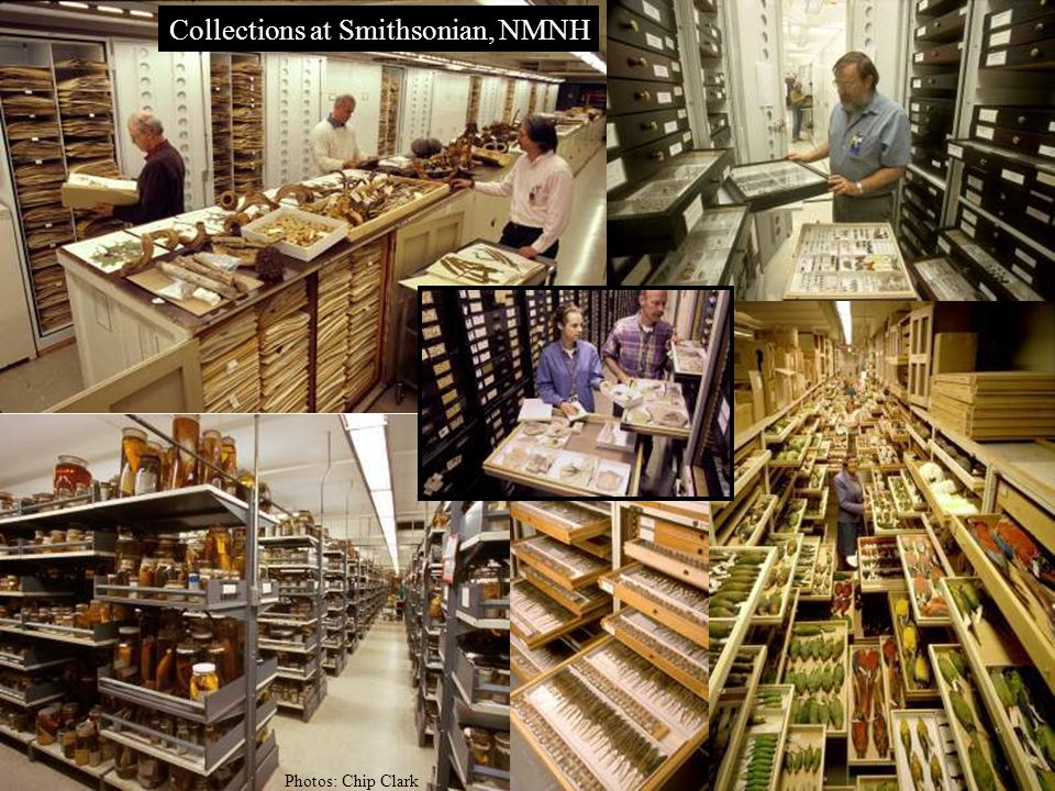 Collections at Smithsonian, NMNH