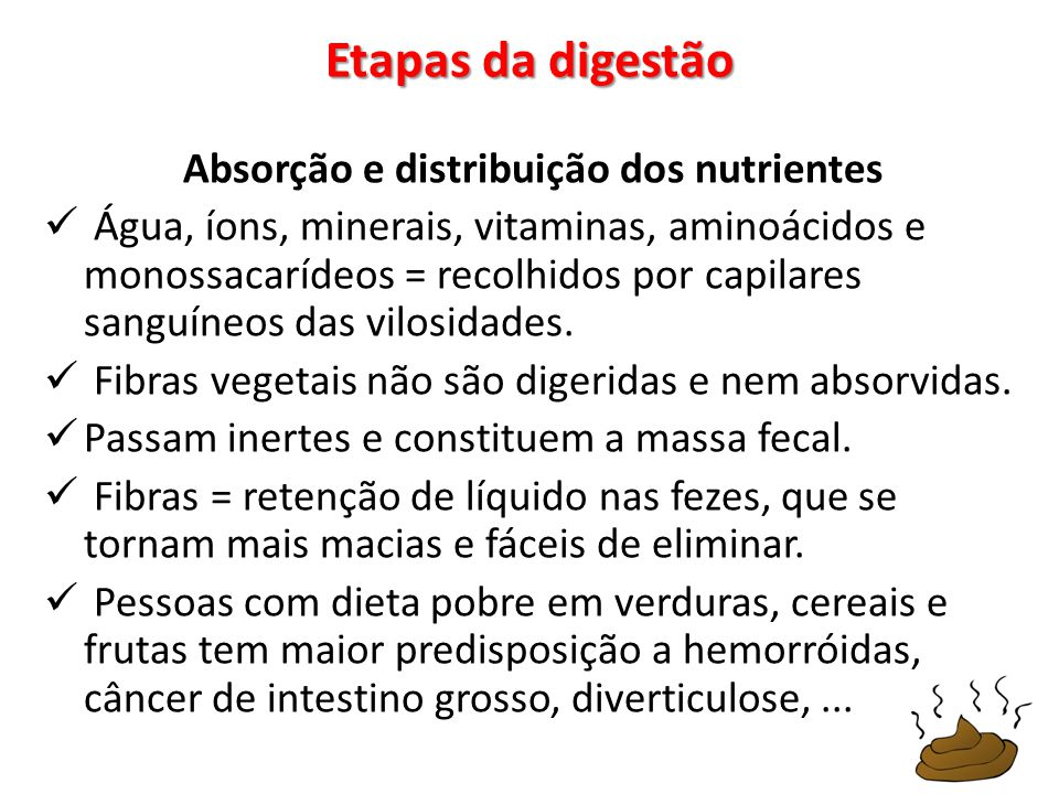 Absorção e distribuição dos nutrientes