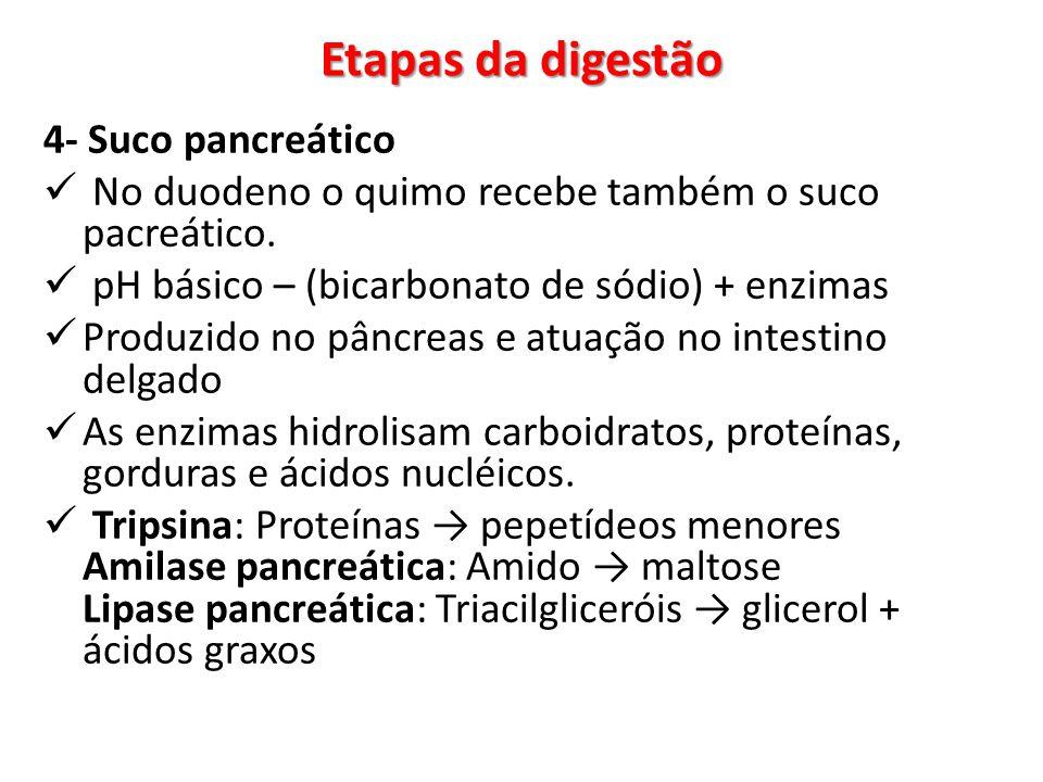 Etapas da digestão 4- Suco pancreático