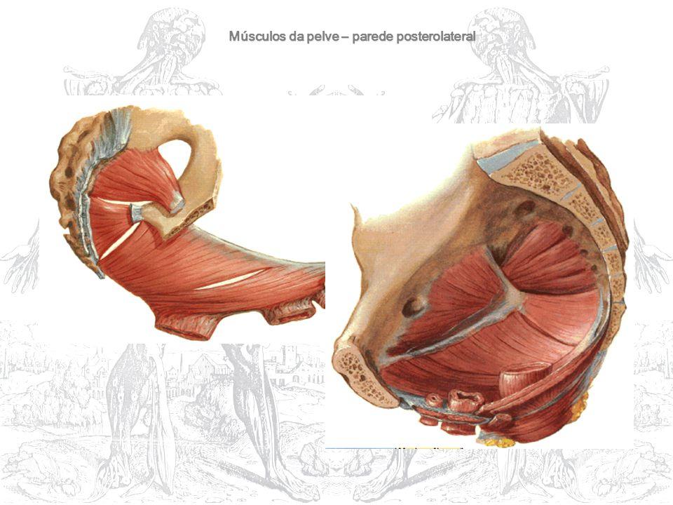 Músculos da pelve – parede posterolateral
