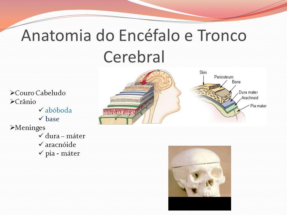 Anatomia do Encéfalo e Tronco Cerebral