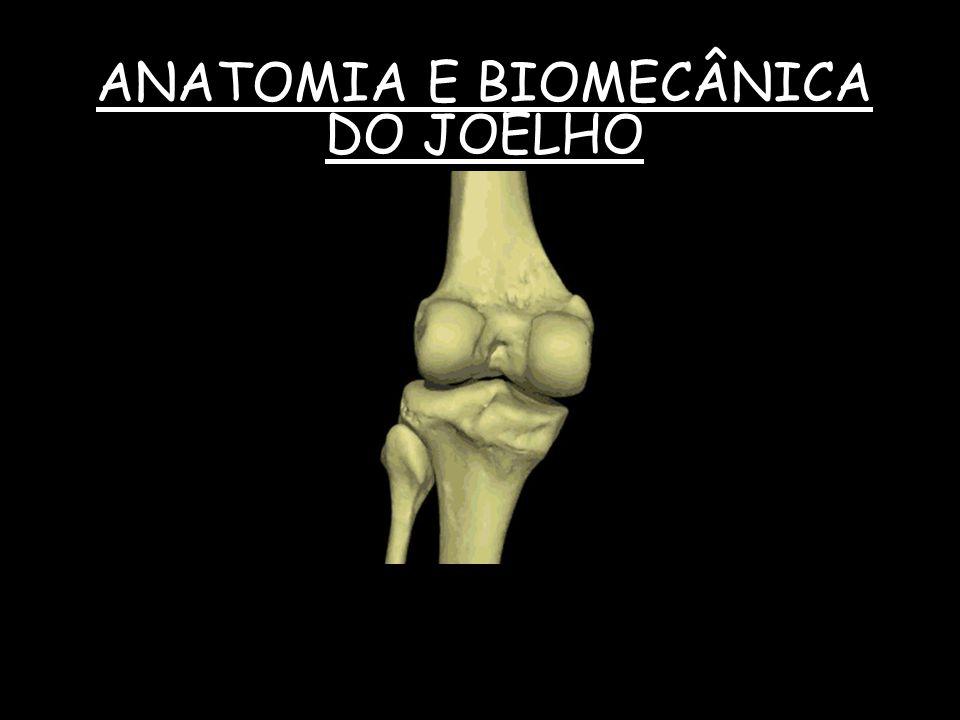 ANATOMIA E BIOMECÂNICA DO JOELHO