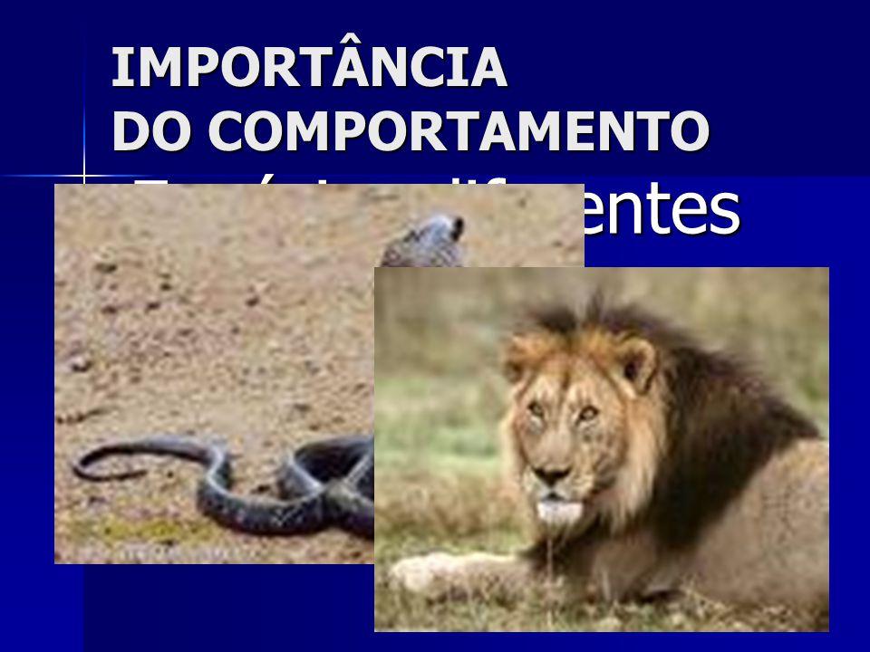 IMPORTÂNCIA DO COMPORTAMENTO