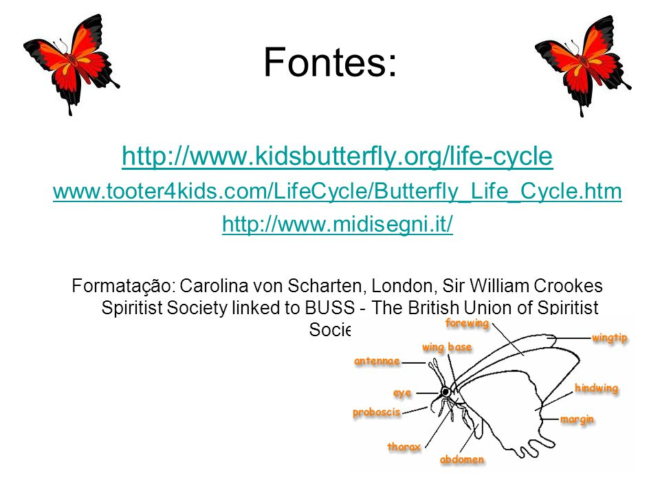Fontes: http://www.kidsbutterfly.org/life-cycle