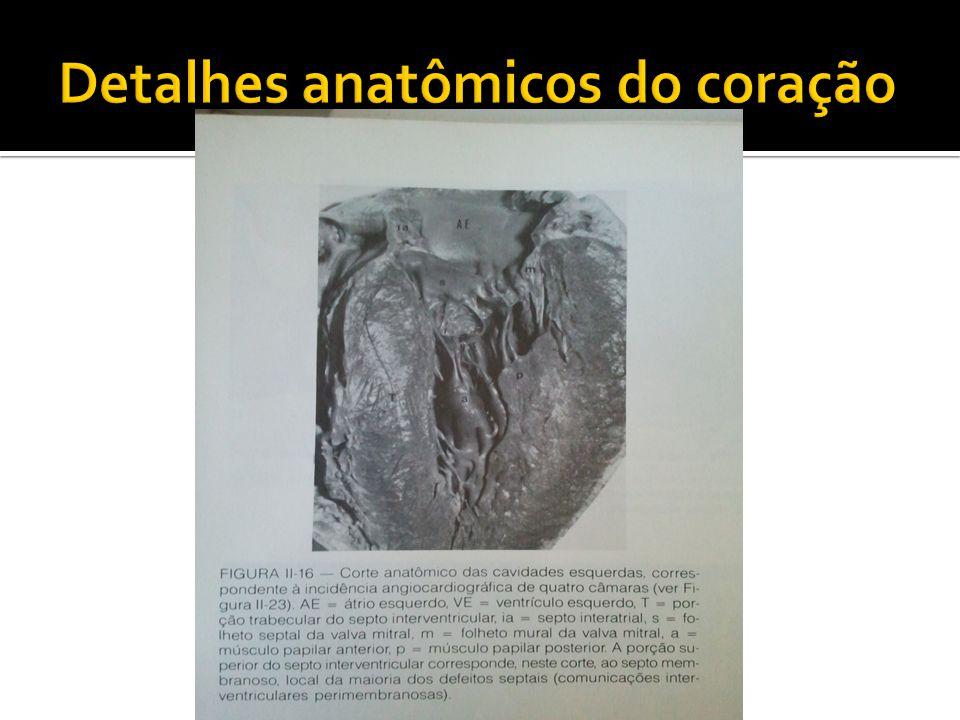Detalhes anatômicos do coração