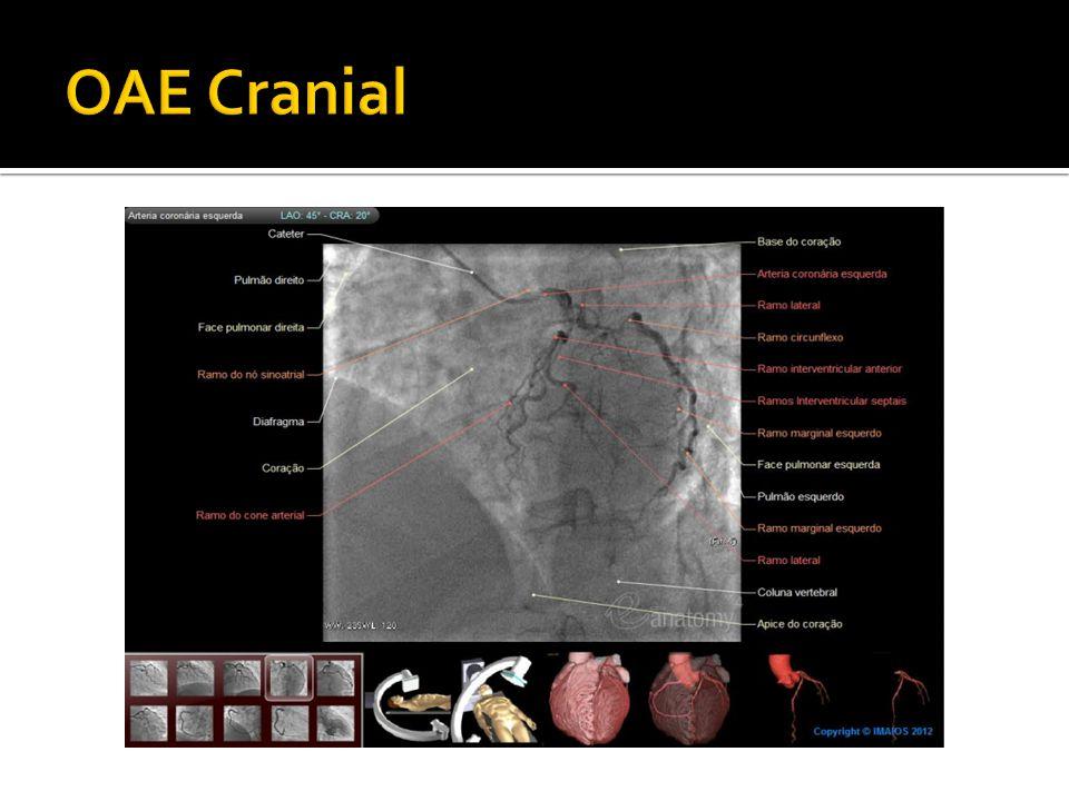 OAE Cranial