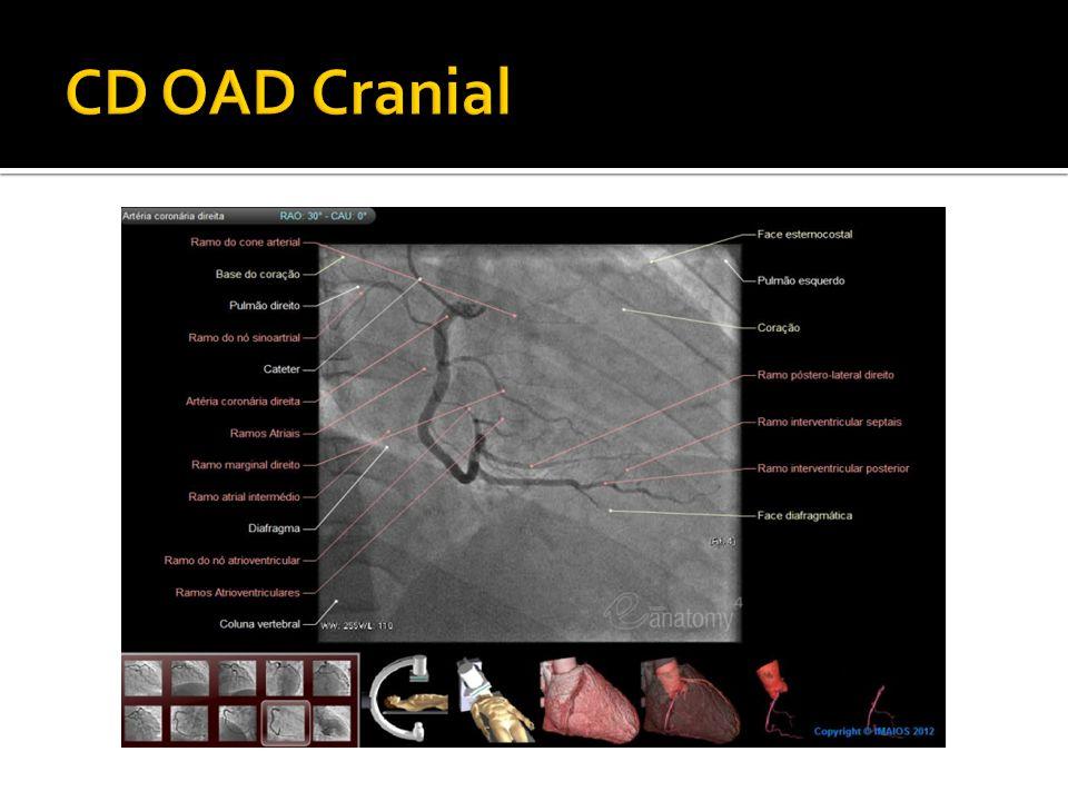 CD OAD Cranial