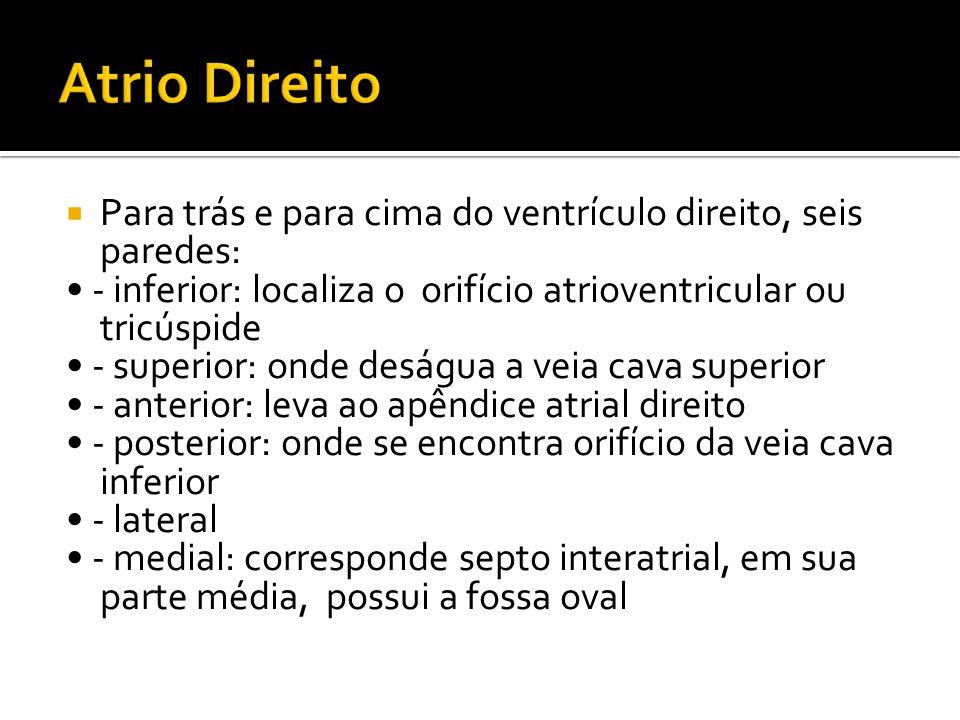 Atrio Direito Para trás e para cima do ventrículo direito, seis paredes: • - inferior: localiza o orifício atrioventricular ou tricúspide.