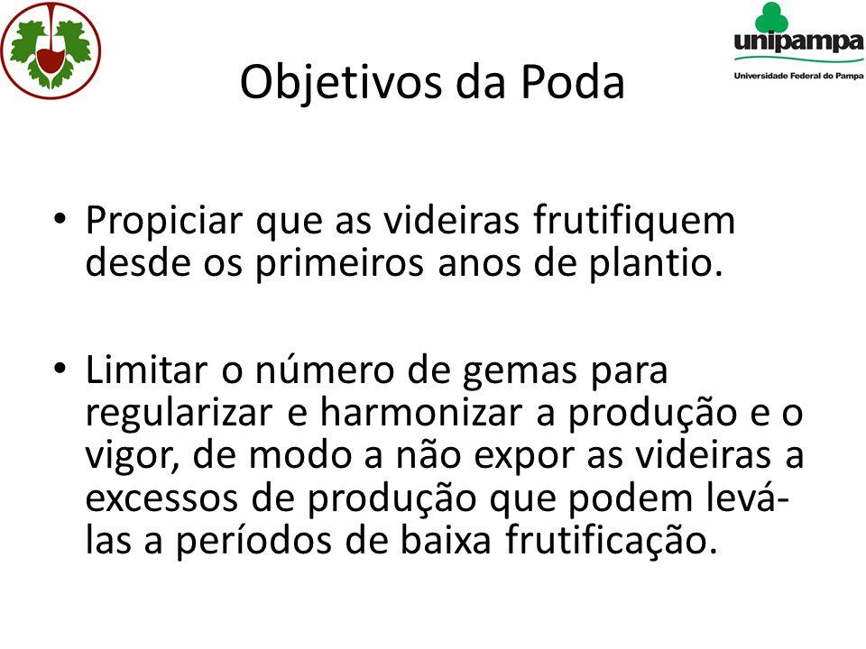 Objetivos da Poda Propiciar que as videiras frutifiquem desde os primeiros anos de plantio.