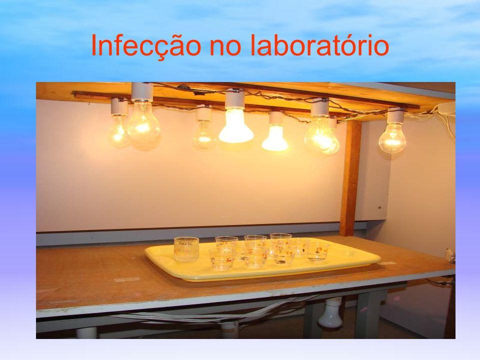 Infecção no laboratório