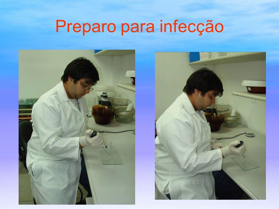 Preparo para infecção