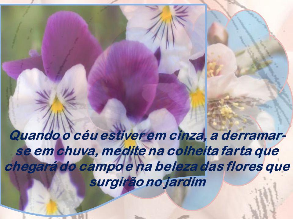Quando o céu estiver em cinza, a derramar-se em chuva, medite na colheita farta que chegará do campo e na beleza das flores que surgirão no jardim