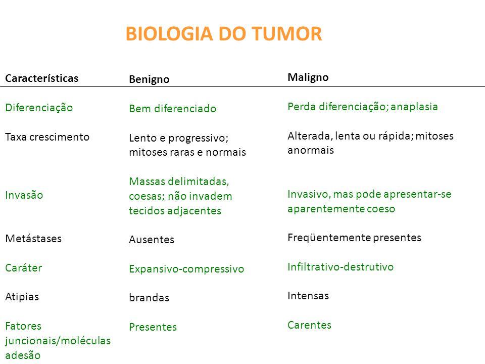 BIOLOGIA DO TUMOR Características Maligno Benigno Diferenciação