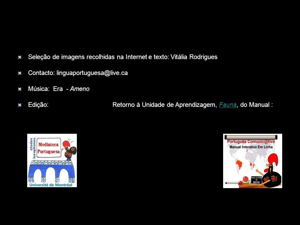 Seleção de imagens recolhidas na Internet e texto: Vitália Rodrigues