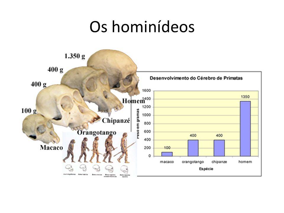 Os hominídeos