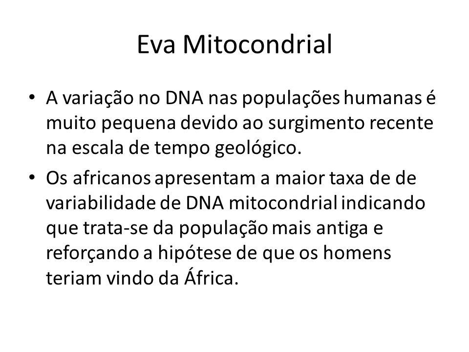 Eva Mitocondrial A variação no DNA nas populações humanas é muito pequena devido ao surgimento recente na escala de tempo geológico.