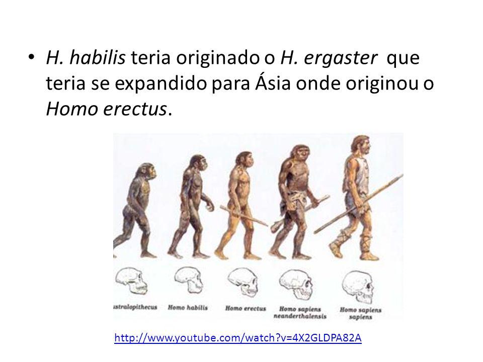 H. habilis teria originado o H
