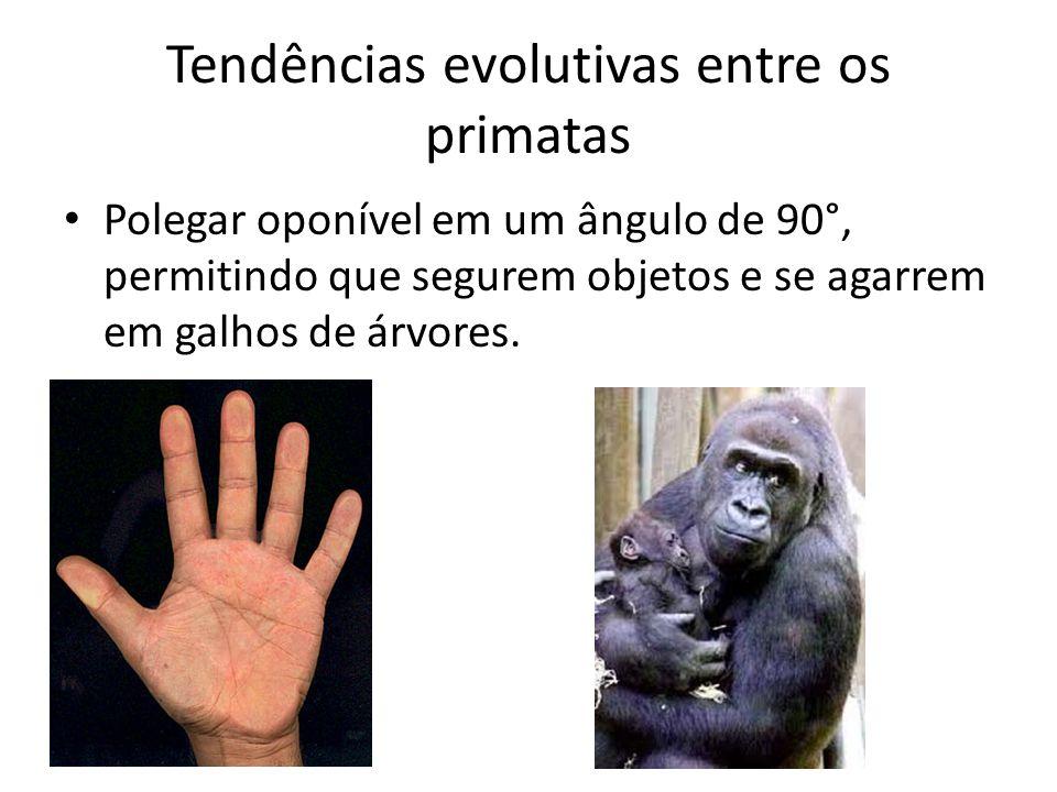 Tendências evolutivas entre os primatas