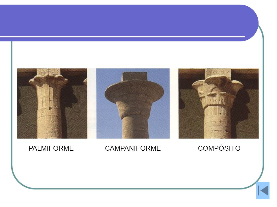 PALMIFORME CAMPANIFORME COMPÓSITO