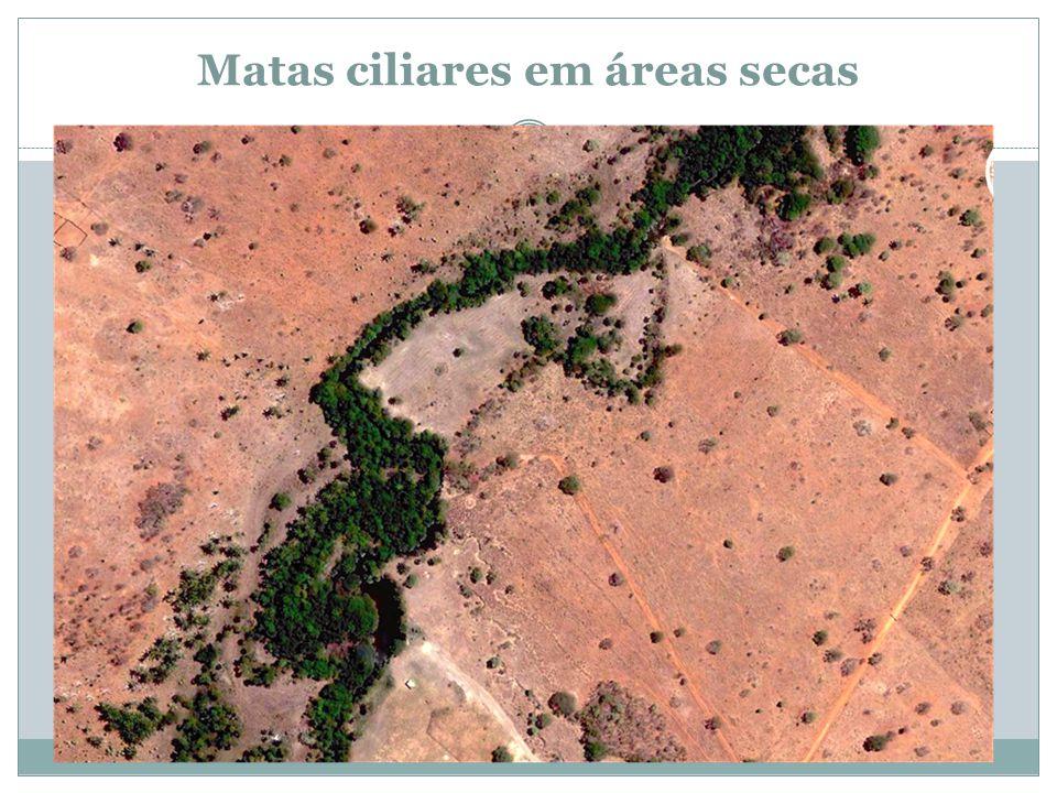 Matas ciliares em áreas secas