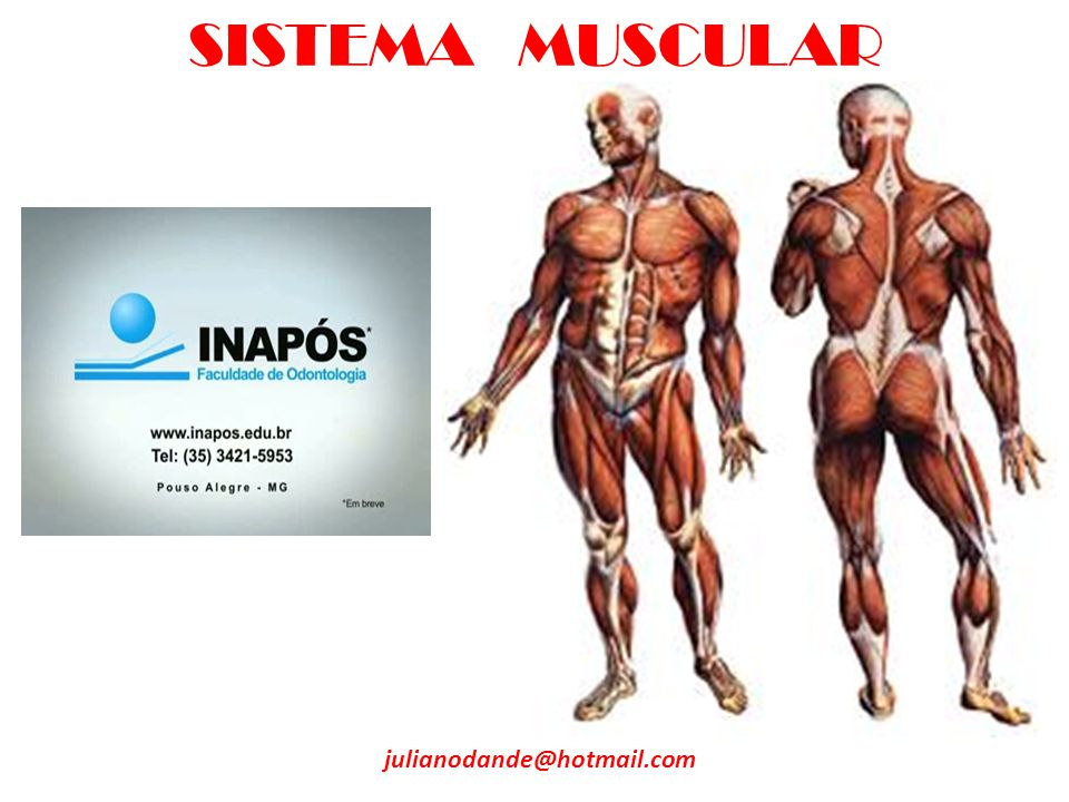SISTEMA MUSCULAR julianodande@hotmail.com