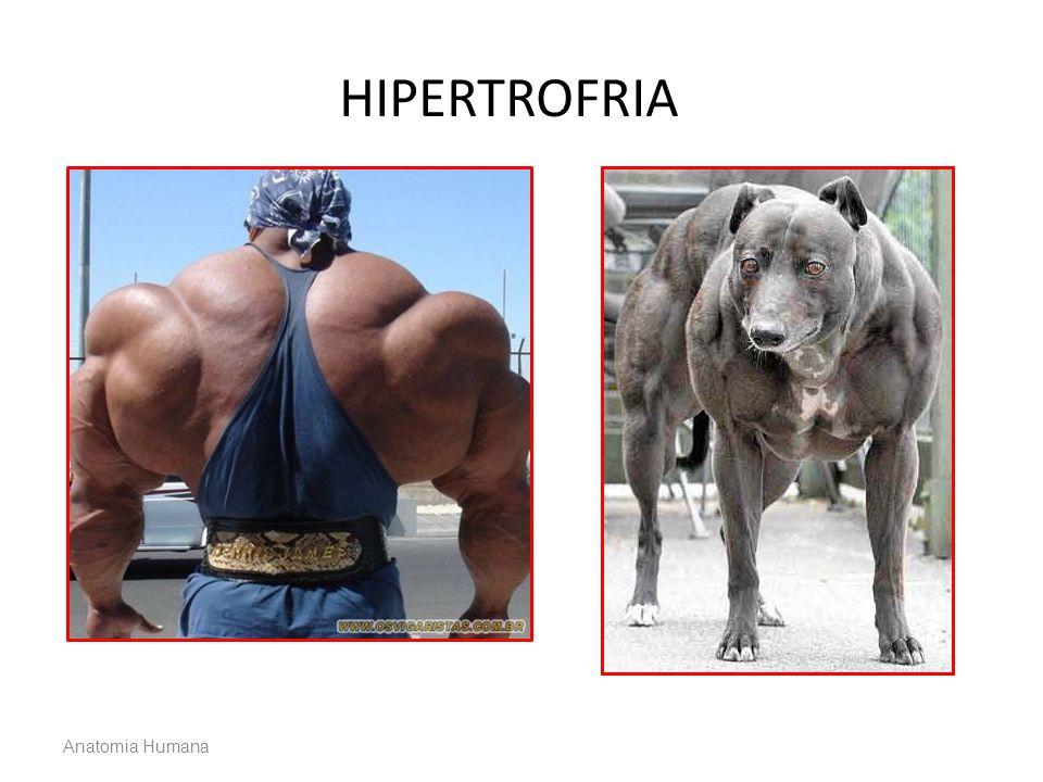 HIPERTROFRIA Anatomia Humana