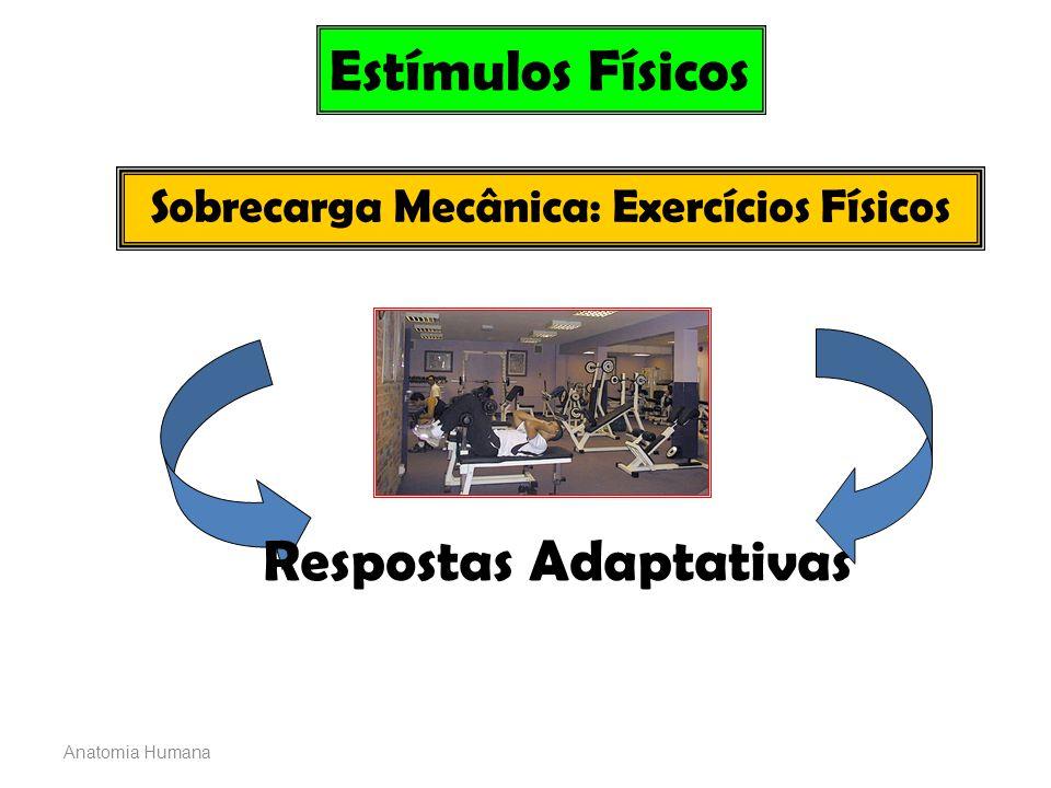 Sobrecarga Mecânica: Exercícios Físicos