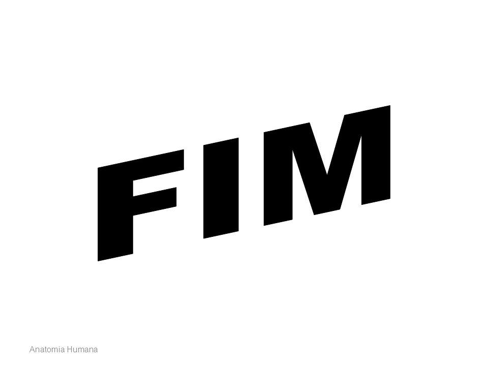 FIM Anatomia Humana