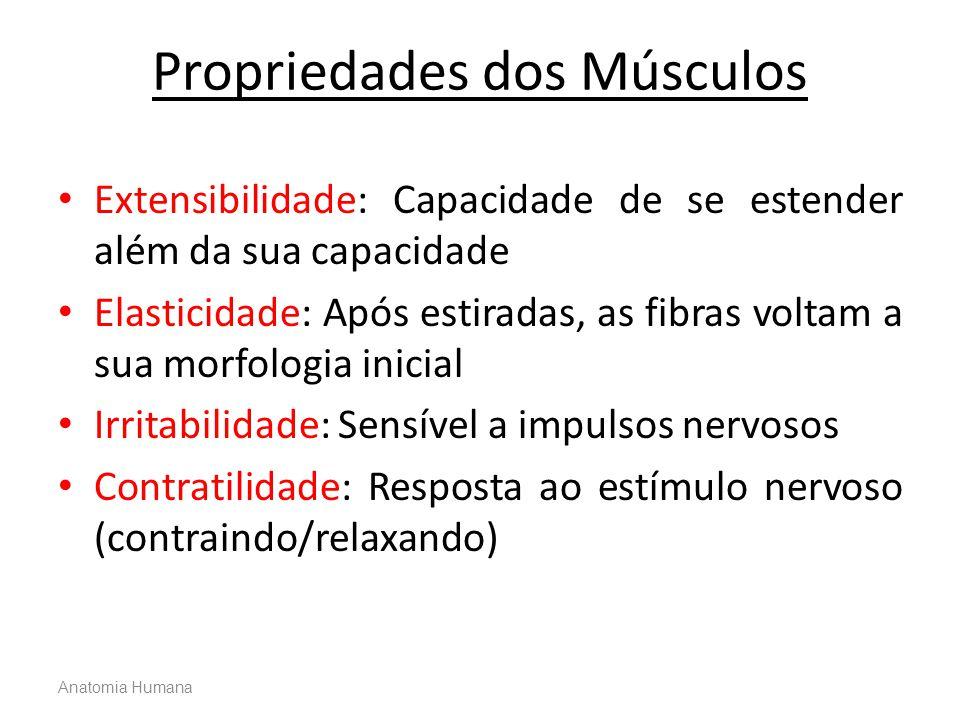 Propriedades dos Músculos