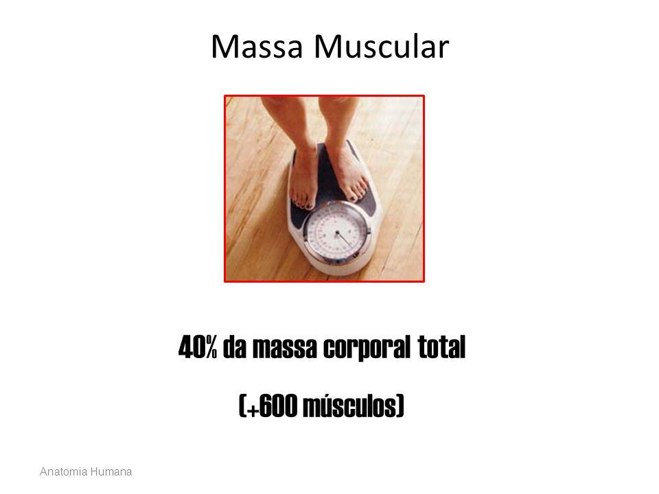 40% da massa corporal total