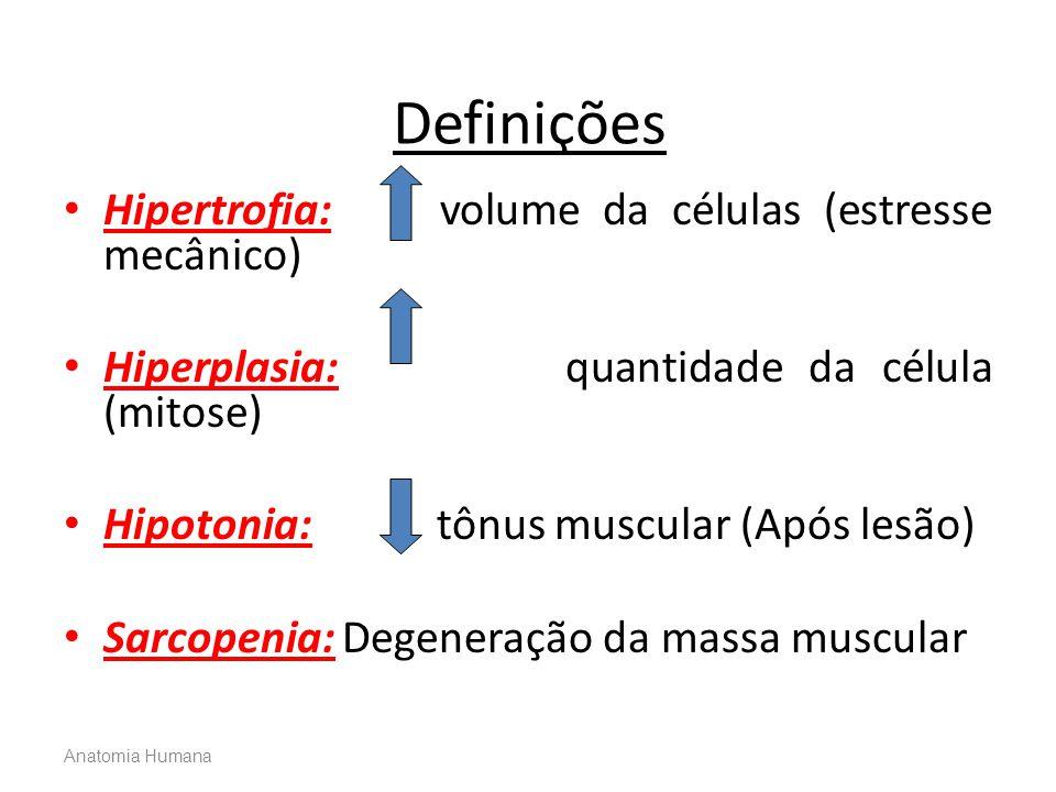 Definições Hipertrofia: volume da células (estresse mecânico)