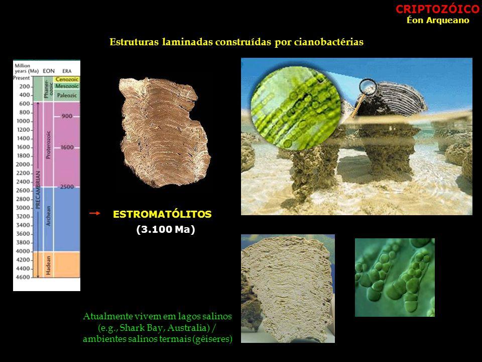 Estruturas laminadas construídas por cianobactérias