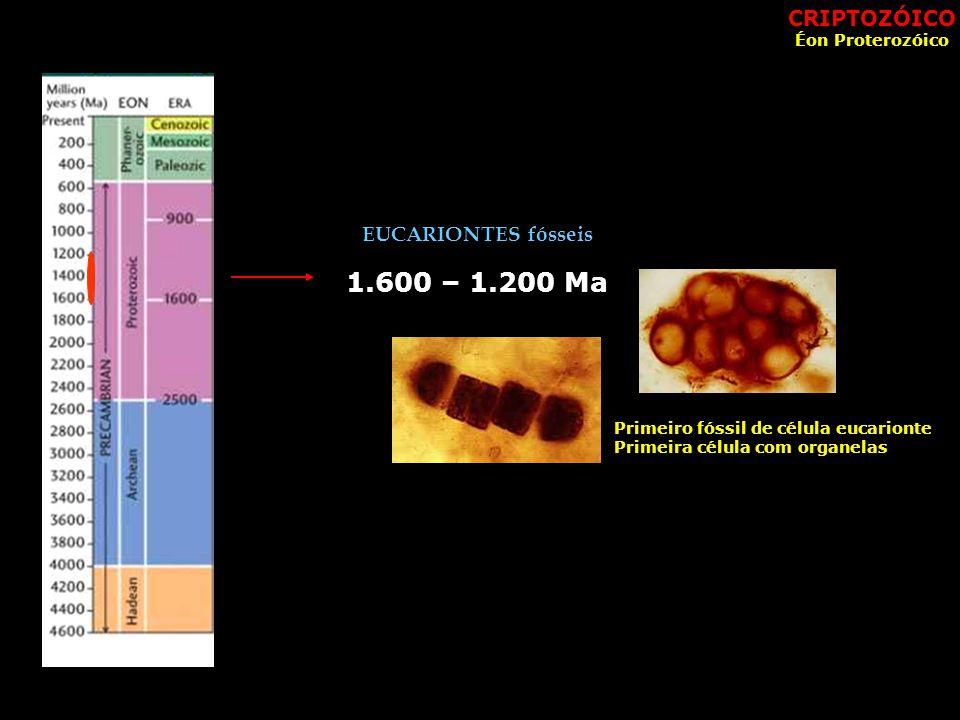 1.600 – 1.200 Ma CRIPTOZÓICO EUCARIONTES fósseis Éon Proterozóico