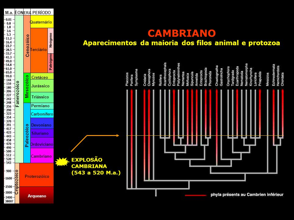 Aparecimentos da maioria dos filos animal e protozoa